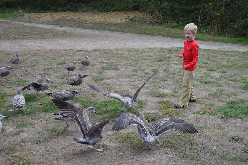 Feeding the Birds 1